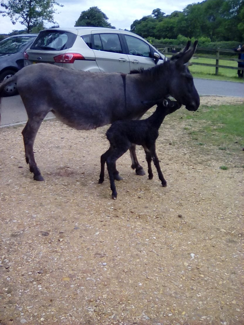 A donkey gave birth